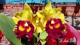 HỘI THI HOA LAN THÀNH PHỐ CẦN THƠ 2.9.2018. 100 Loài Lan Rừng Đẹp -  40 loài hoa lan rừng đẹp nhất.