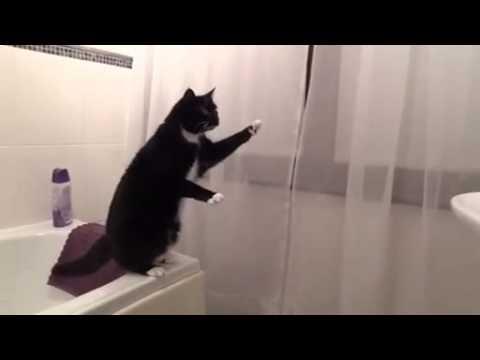 Unchat se regarde dans un miroir youtube for Regarde toi dans un miroir