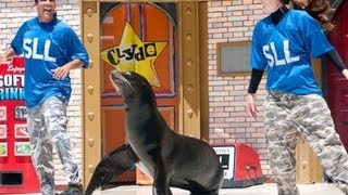 ♥♥ Sea Lions LIVE Comedy at SeaWorld San Diego