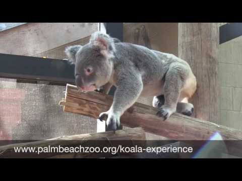 Palm Beach Zoo Visit Fla Attraction Finder Video