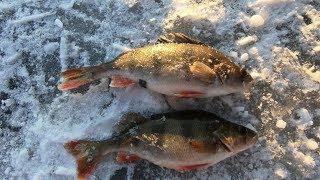 Эхх, Вот Это рыбалка! ВСЕГДА БЫ ТАК КЛЕВАЛО!!! Два дня незабываемой рыбалки на Окуня.