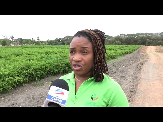 Can Jamaica Protect And Improve Its Agricultural Sector?-Part One  |  Beyond The Crisis #14  | CVMTV