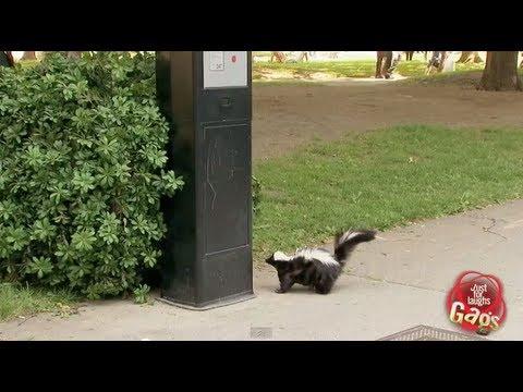 Skunk Parking Prank