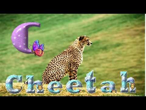 ANIMAL PARADE -- Animal Parade Music   -- ALPHABET SONG!