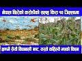 करोडौंको बथान सलह किरा नेपाल भित्रियो, तराई र पहाडको बाली छिनमा स*खापपार्दै ||salaha insect in nepal
