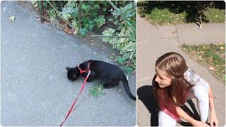 VLOG Выгуливаем кота и Кира покрасила волосы