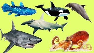 Animals in the Ocean   Learn Animals names and Sounds for Kids