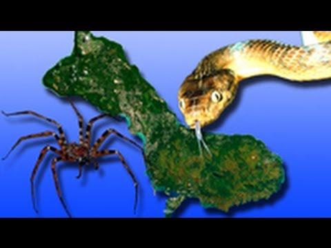 Alien Brown Snakes Help Spiders Overrun Guam