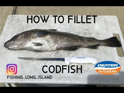 How To Fillet A Codfish Simple & Easy & Remove Parasites
