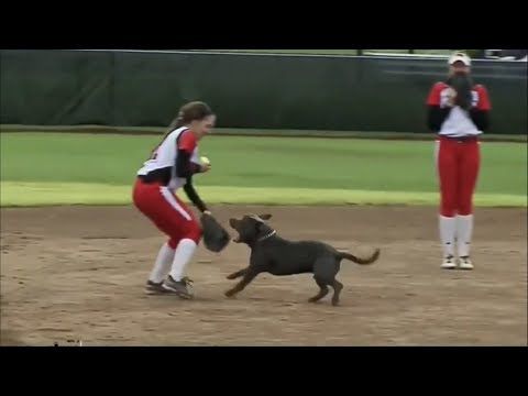 Most Unexpected Animal Interference Moments in Sports | Funny Invasions & Interruption