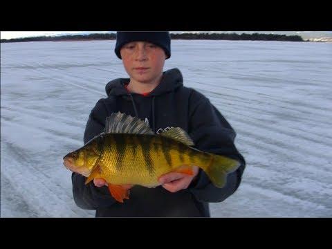 Monster 2lb.Jumbo Perch Through The Ice, JawJacker Video