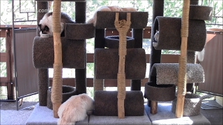 How To Build A Six Foot Cat Tree