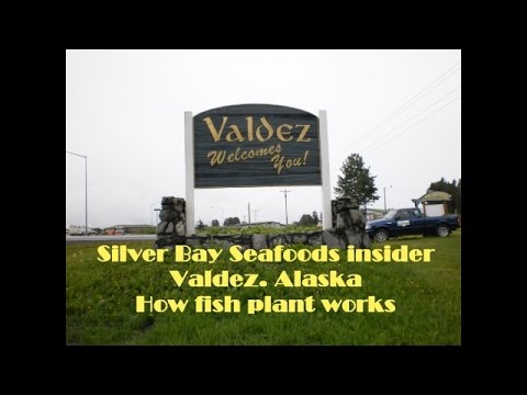 Silver Bay Seafoods. Valdez. Alaska. How fish plant works/Работа на рыбном заводе Аляски. Валдиз