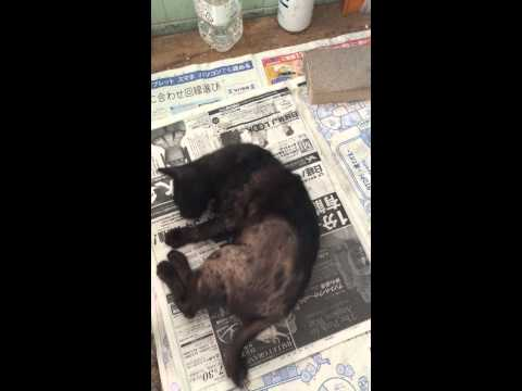 疥癬の猫 保護後3週間