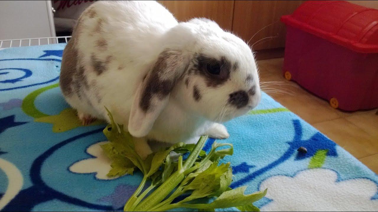 alimentazione del coniglio , mondo lapino video 1 - youtube
