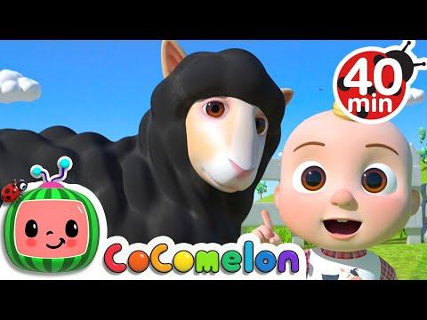 Baa Baa Black Sheep Song + More Nursery Rhymes & Kids Songs - CoComelon