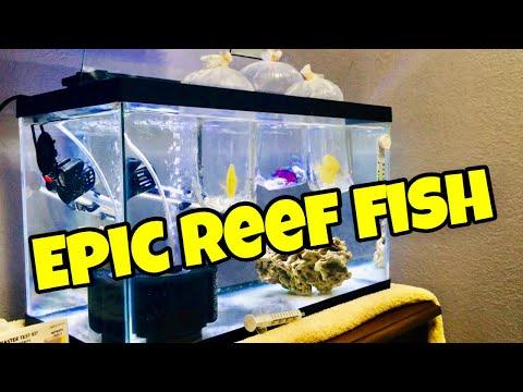New Marine Fish For Saltwater Home Aquarium