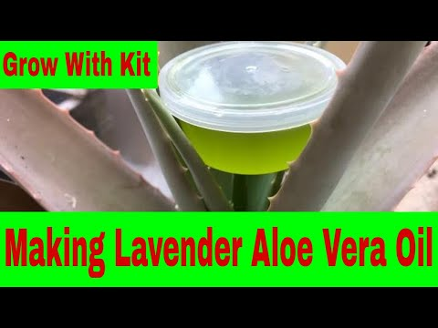 making-lavender-aloe-vera-oil-at-home