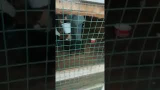 Приют бездомных животных Горячий Ключ