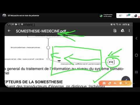 Physiologie La Somesthésie | 2éme Med