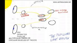 USMLE Tutorial - The Pupillary Light Reflex