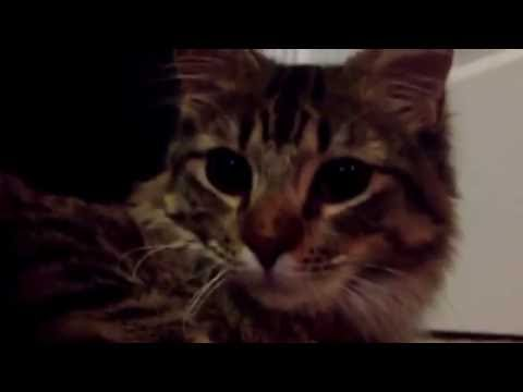 Funny dogs and cats scared of farts compilation Try not to laugh