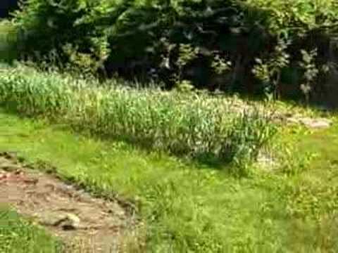 Old School Skills: Organic farming in Carver