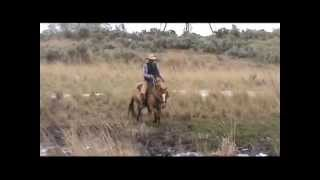 Emma Horn Rapids - 2009 Red Dun Mare - Riding Out