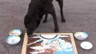 Labrador Retriever Painting A Picture