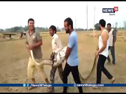 15Feet long Python Rescued in Hapur up | News18 Telugu