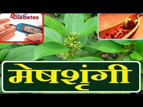 मेषशृंगी---डायबिटीज-और-कोलेस्ट्राल-का-उपाय-meshashringi---diabetes-&-ldl-cholestorol
