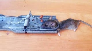 How To Make A Mouse Trap - Rat Trap Easy, Keri Mousetrap video! 37