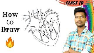 Human heart diagram for class 10th
