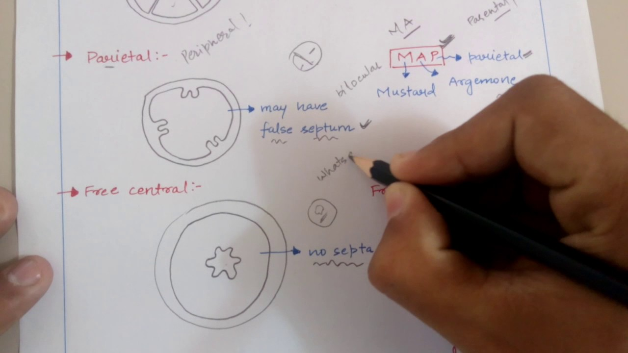 Trick for placentation in flowers plant morphology for neet aiims trick for placentation in flowers plant morphology for neet aiims jipmer kvpy etc exams ccuart Gallery