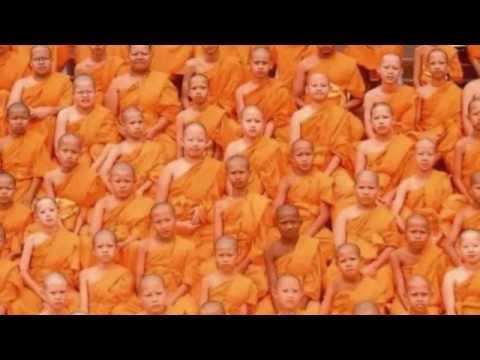 Cell - Orange