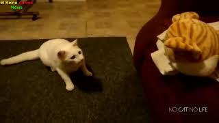 Các pha hú hồn hài hước của b๐ss mèo | Clip Chó Mèo