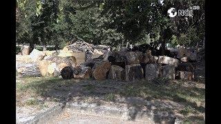 """Cimitirul de copaci din parcul """"Valea Morilor"""""""