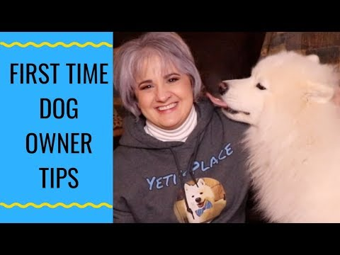 Tips For First Time Samoyed Owners