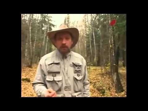 Ориентирование в лесу если вы заблудились.Часть 1