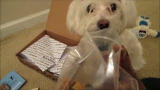 Vlog #611 Bentley's Jan Bark Box & Secret Giveway!!!! Jaunuary 23, 2015