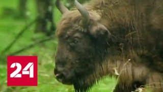 Красную книгу Москвы пополнят почти 100 новых животных и растений - Россия 24