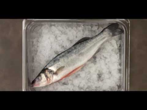 How To Store And Preserve Fish