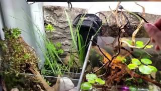 Akwarium z roślinami bagiennymi.