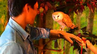 倉敷美観地区にある「倉敷フクロウの森」は、様座な種類のフクロウを自...