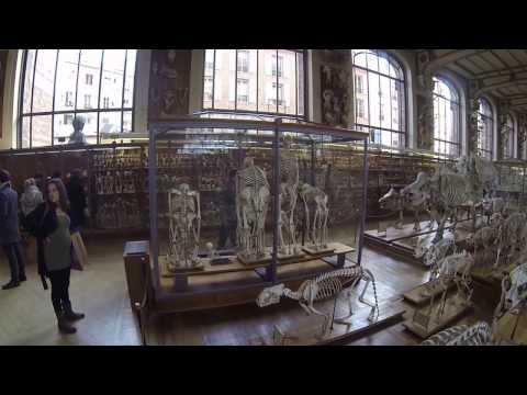 Galerie de Paléontologie et d'Anatomie Comparée Museum Paris