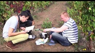 Sardinias Finest – Casu Marzu Maggot Ice Cream