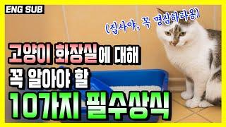 여러분이 반드시 알아야하는 고양이 화장실 필수상식 10…