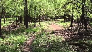 Old Path And Bridge In The Woods ~ Metal Detecting