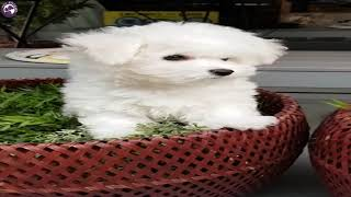 Cute Videos Funny Puppies - by Pet Friend