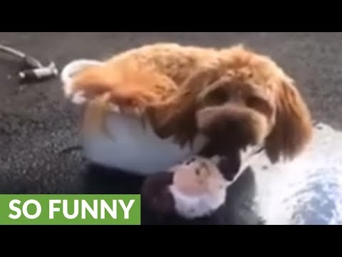 Dog turns water bowl into her own personal pool